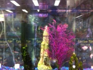 Pineville Fish Tank